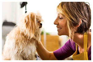 stylist grooming pet dog